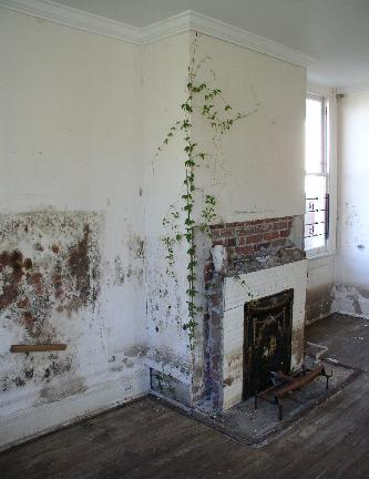 [Some ivy growing inside the house]