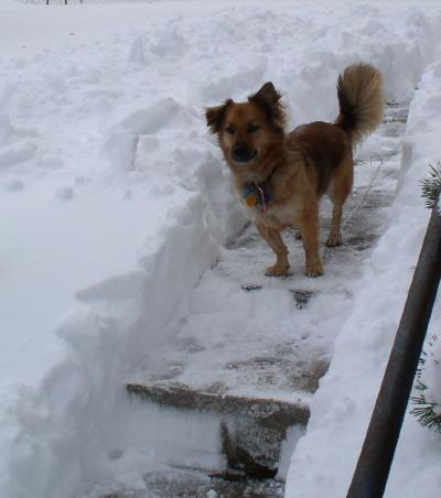 [Nutmeg standing among snow up to his shoulder]